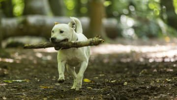Click here to dig out information about dog friendly places with the National Trust