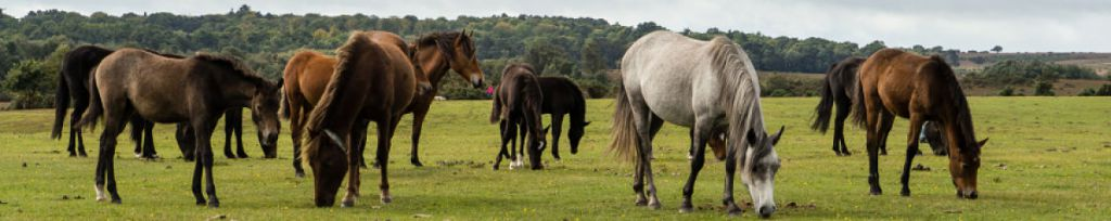 Visit the Friends of the New Forest here