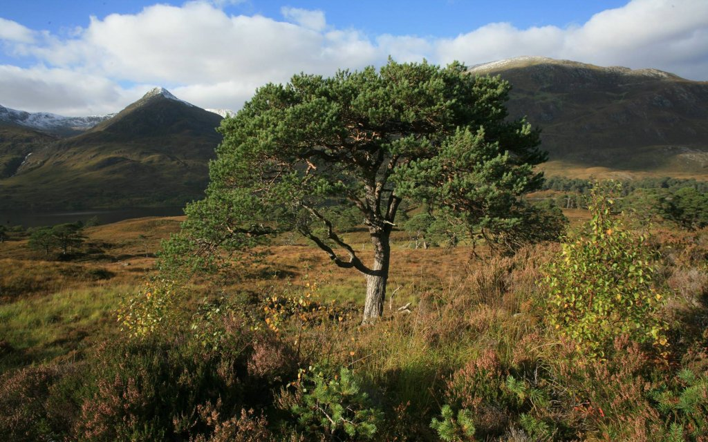 Give a membership and help the beautiful Caledonian Forest in Scotland