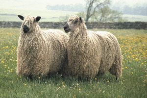 Find out more about the Rare Breeds Survival Trust