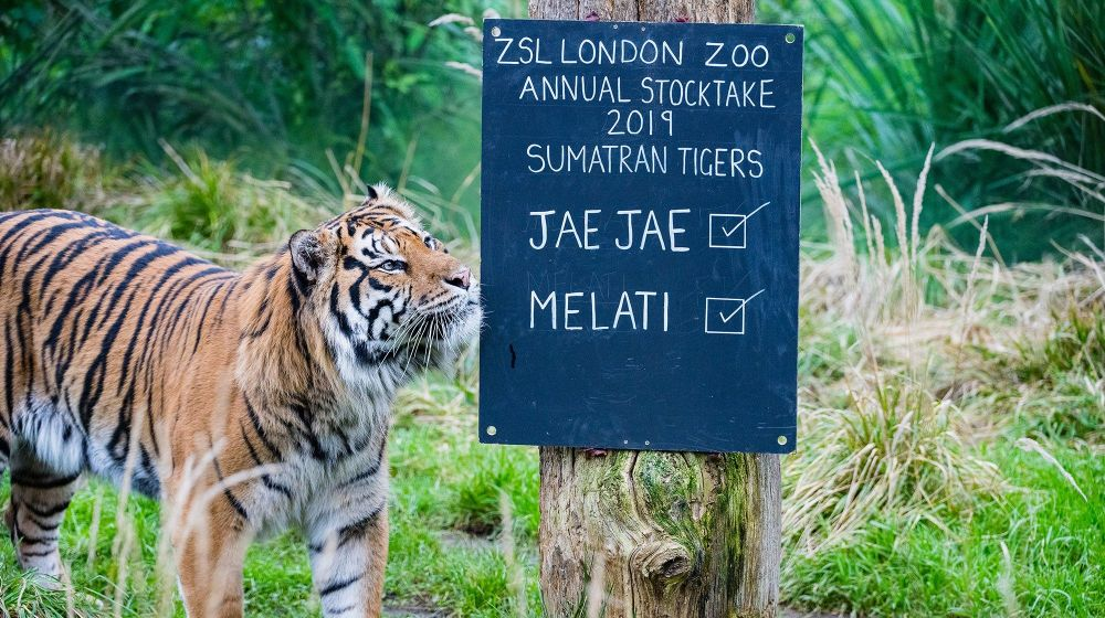 Jae Jae at London Zoo's stocktake