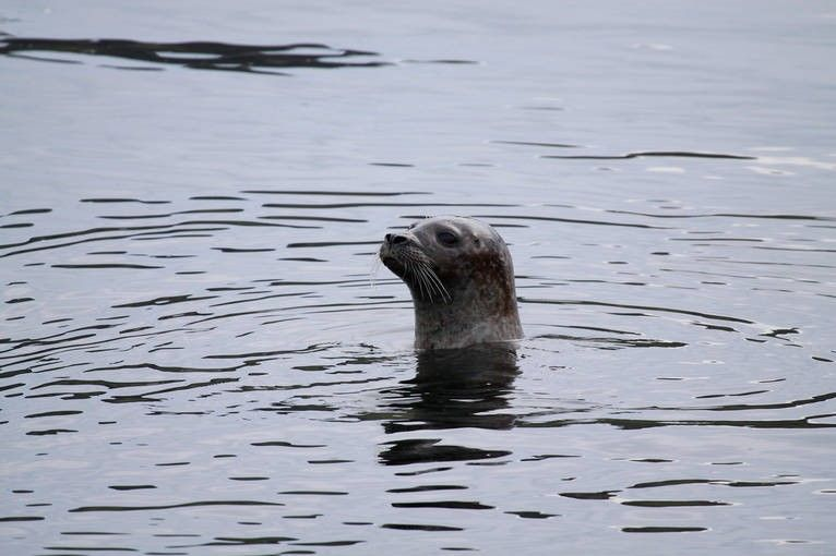 A seal on the coastline