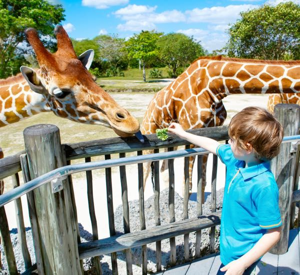 What about an animal experience day?