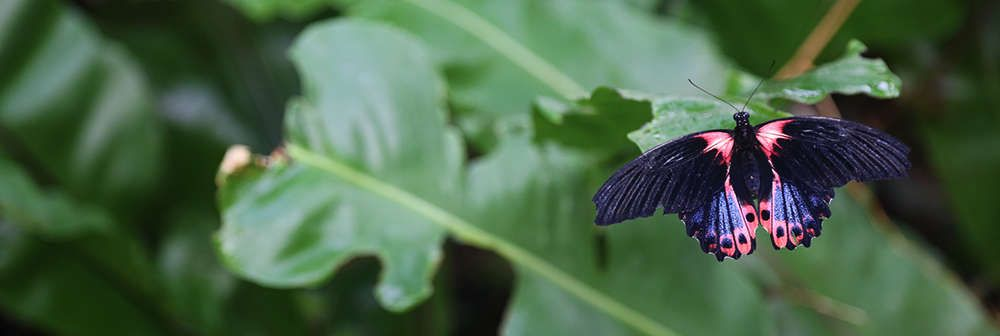 Immerse yourself in watching butterflies at Butterfly Paradise