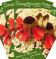 Give a membership to the The Cottage Garden Society