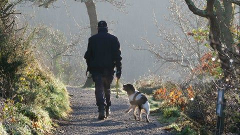 Fresh air, walkies, new places to visit and, best of all, the company of your beloved dog(s)
