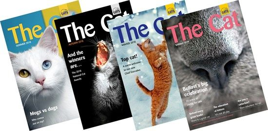 Members receive the excellent magazine The Cat, four times a year