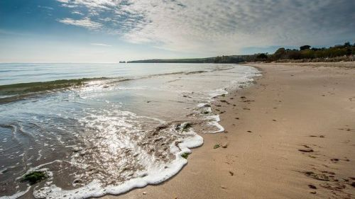 Walks on Studland Bay in Dorset