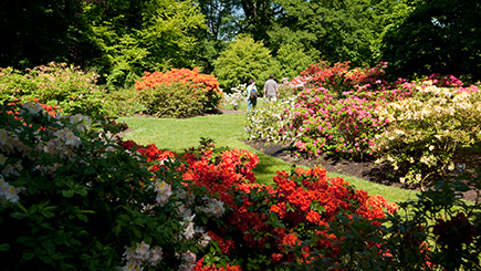 Enjoy a private guided tour for an hour round Kew Gardens