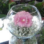 Fish Bowl with Gerbera.