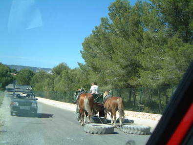 Javea. horses pulling tyres