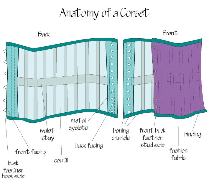 anatomy of a corset