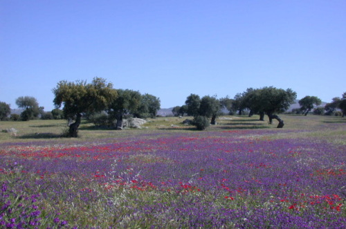 Extremadura Scenery 2