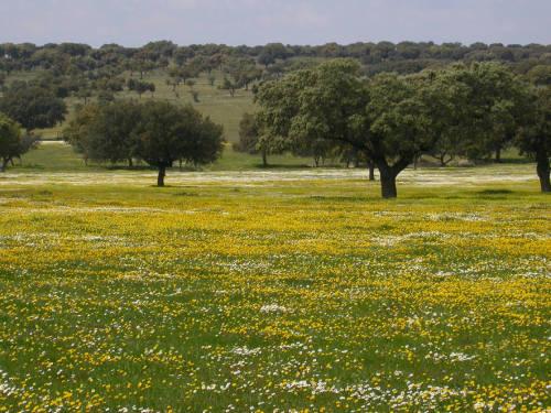 Extremadura Scenery