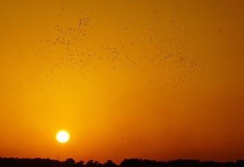 Tarifa Migration
