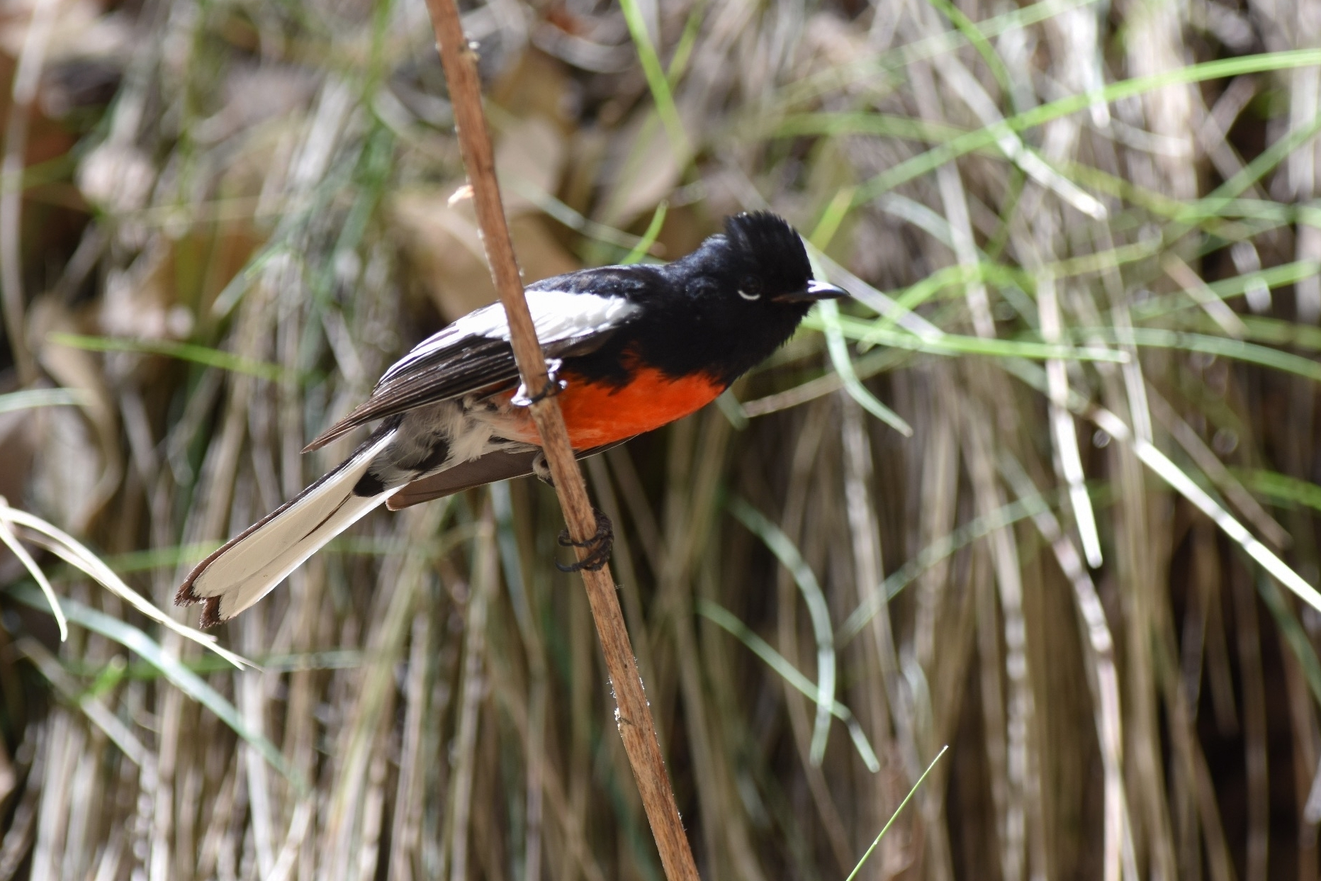 Arizona - Condors, Hummingbirds & the Second Spring