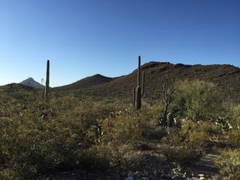 Sonoran Desert 2