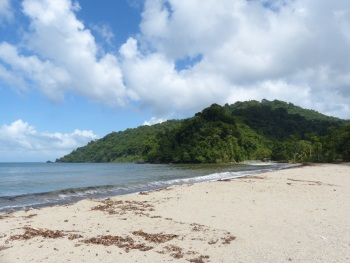 Grand Riviere Beach by Peg Abbot of Caligo Ventures