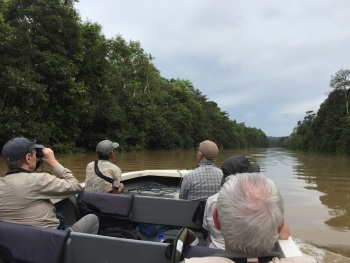 Birding along the Kinabatangan River 2017