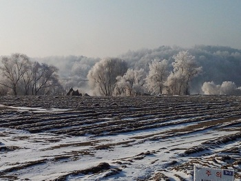 Frost in South Korea