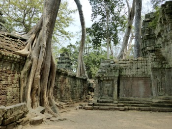 Ta Prohm by Nick Upton