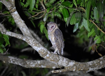 Zoothera Birding South India And The Andamans 2016