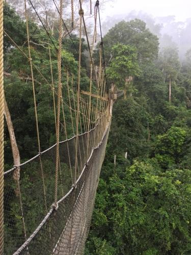 Kakum Canopy Walkway:Nick Bray