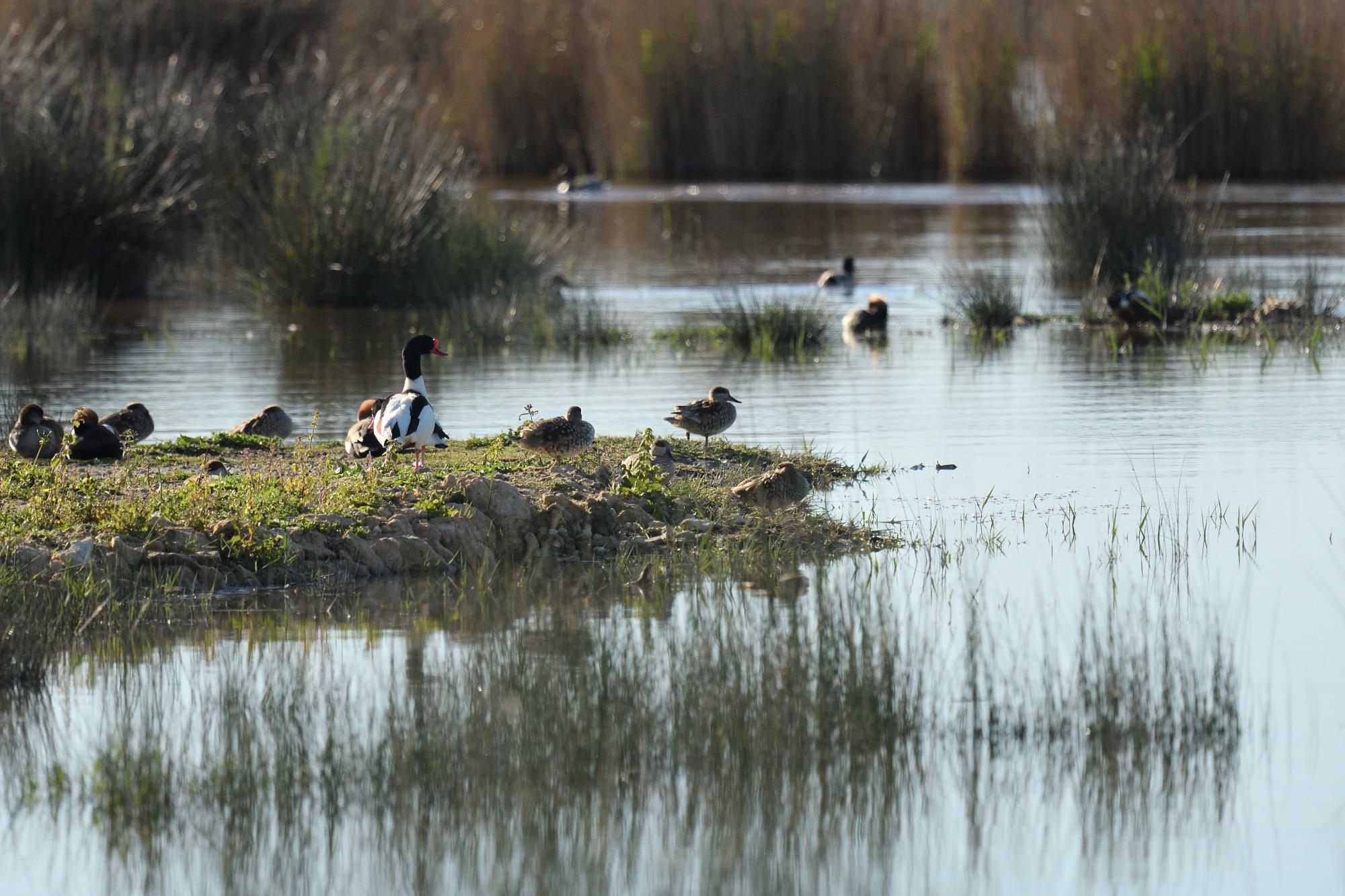 S'Albufera Marsh, Mallorca