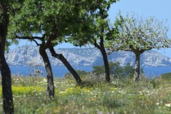 Spring wildflowers - Ibiza 2018 by Nick Bray_00009