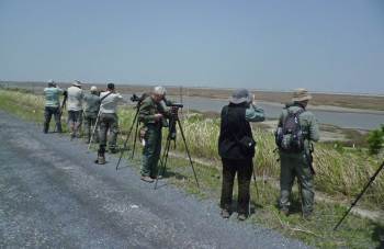 Birding at Nanhui by Nick Bray