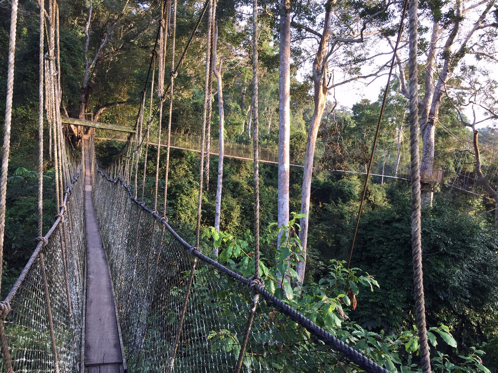 kakum Canopy Walkway by Nick Bray
