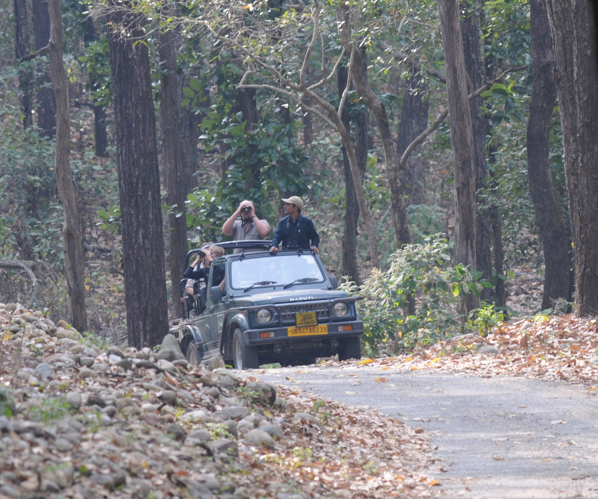 Looking for Tigers at Corbett