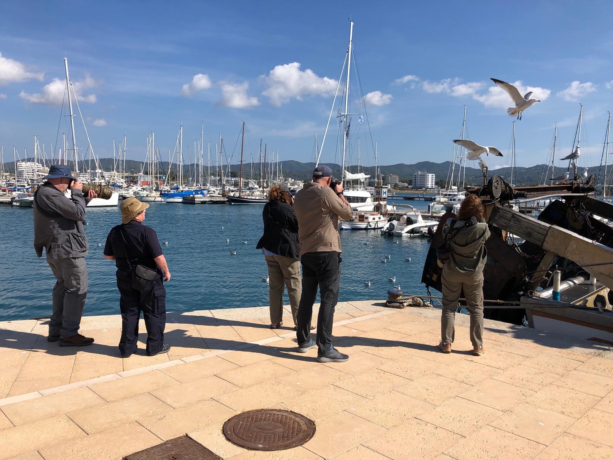 group Watching Audouin's gulls
