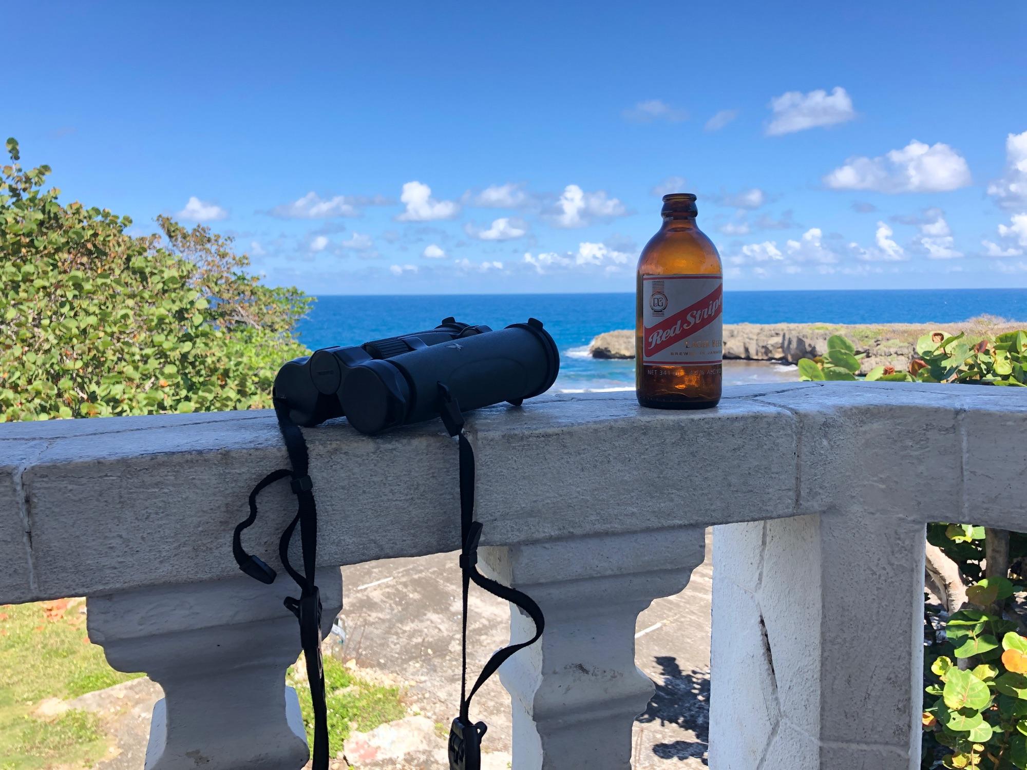 jamaican birding