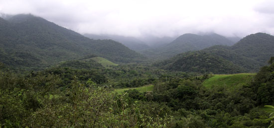 The-Atlantic-Rainforest