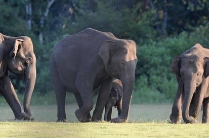 Asian-Elephants at Nagarhole