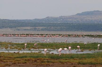 Lake-Abiata-1