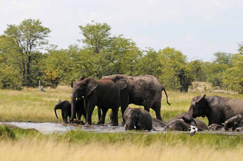 African Elephants - Namibia tour 2014