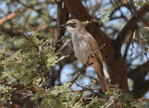 Herero Chat - Namibia Tour July 2014