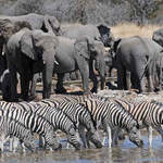 Etosha Waterhole July 2014 by Nick Bray