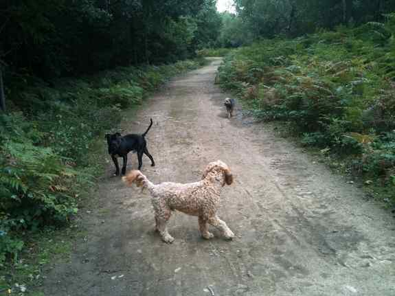 Hurst Woods main path (Alfie)