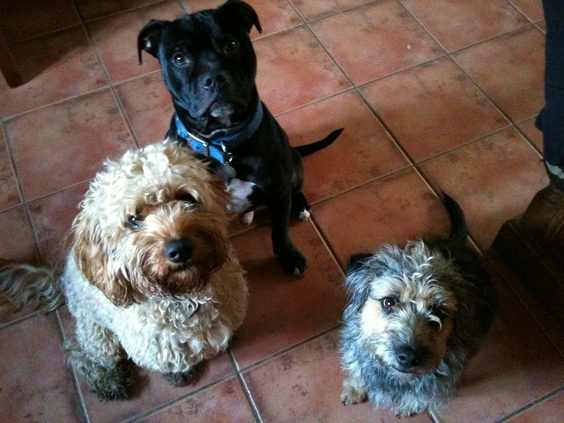 Alfie, Daisy and Puppy