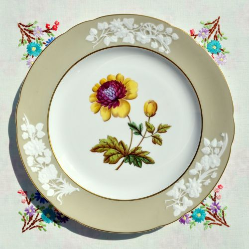 Spode Lady Blessington Anemone Stone Y7195 27cm Plate