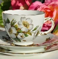 Delphine White Rose Vintage China Teacup Trio c.1950s