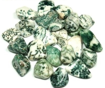 Tree Agate Tumblestone Crystal & Information Card Set