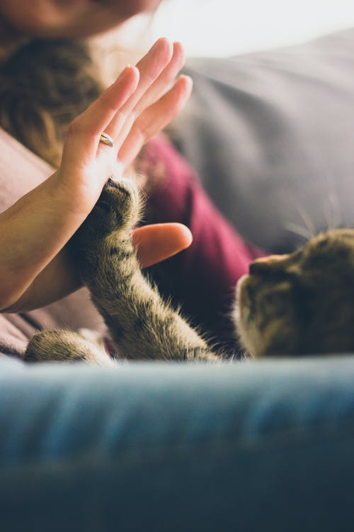 Cat High Five