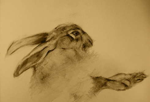 Study of a Dead Hare