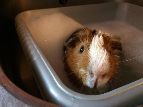 hot tub howard