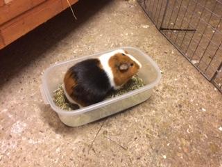 howard in box