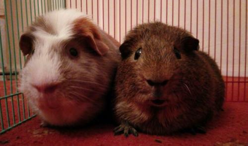 a and b piggy